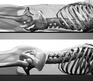 骨盤の状態。上が仰臥位で下が腹臥位。